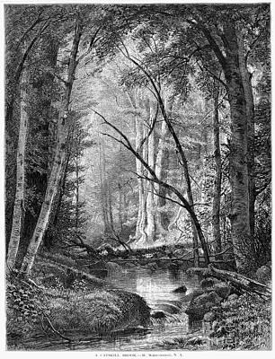 Hudson River School Photograph - Catskill Brook, 1873 by Granger
