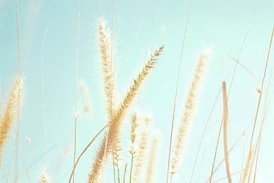 Santa Rosa Photograph - Cattail Grass In Sunshine by JoyHey