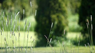 Wall Art - Photograph - Cattails by Cate Rubin