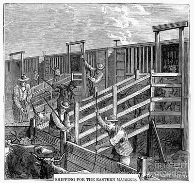Cattle Drive, 1874 Art Print by Granger