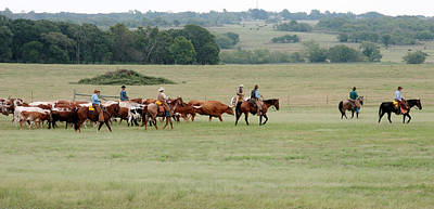 Cattle Drive Photograph - Cattle Drive On Duncan Bypass by Toni Hopper