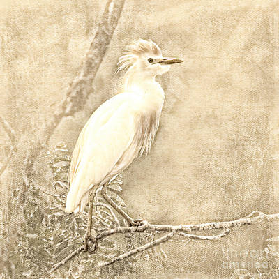 Ibis Digital Art - Cattle Egret Mono by Betty LaRue