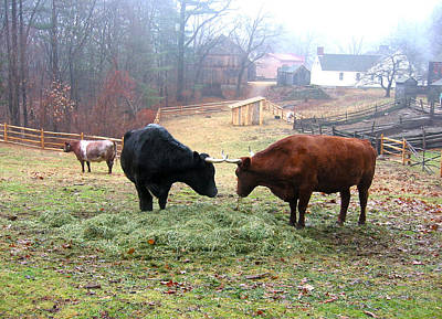 Photograph - Cattle In The Mist by Healing Woman