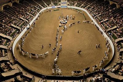 Cattle Show At The Coliseum Art Print