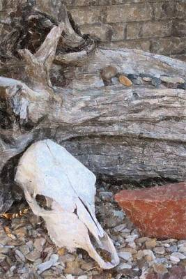 Photograph - Cattle Skull by Donna G Smith