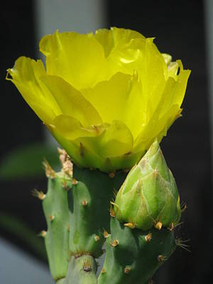 Wall Art - Photograph - Catus Beauty by Evelyn Haye