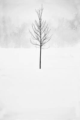 Snow Photograph - Caught In The Blizzard by Andrew Soundarajan