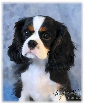 Pup Digital Art - Cavalier King Charles Spaniel Tri Pup by Maxine Bochnia