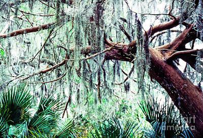 Cedar Draped In Spanish Moss Art Print by Thomas R Fletcher