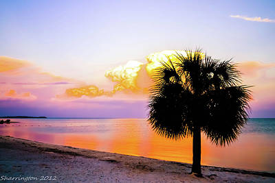 Photograph - Cedar Key Sunset by Shannon Harrington