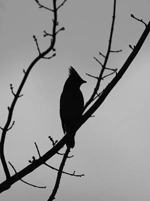 Angels And Cherubs - Cedar Waxwing - Bird - Waiting for Nightfall by Travis Truelove