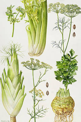Tuber Painting - Celery - Fennel - Dill And Celeriac  by Elizabeth Rice