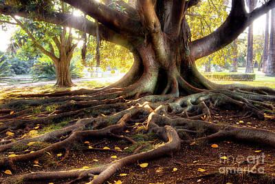 Tree Roots Photograph - Centenarian Tree by Carlos Caetano