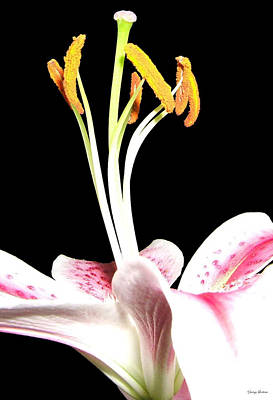Art Print featuring the photograph Centerpiece Lily 001 by George Bostian