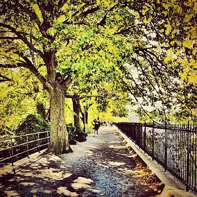 Pathway Wall Art - Photograph - Central Park Canopy by Laura Douglas