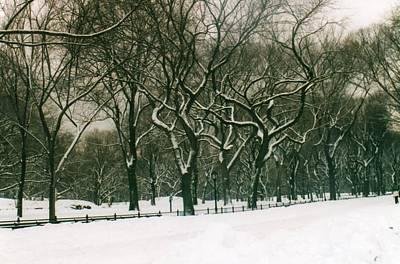 Photograph - Central Park by Melissa Partridge