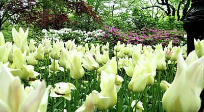Photograph - Central Park Tulips by Lorraine Devon Wilke