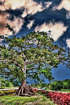 Puerto Rico Digital Art - Centuries Old Ceibas Tree by Frank Feliciano