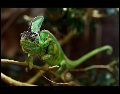 Chameleon Art Print by 1d110