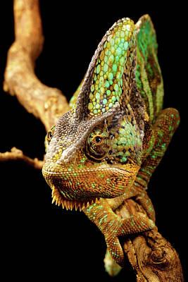 Chameleon Print by MarkBridger