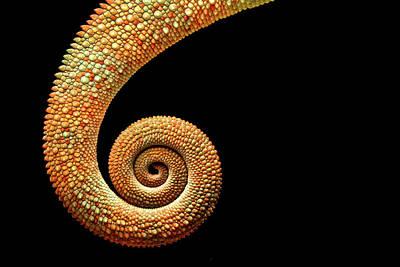 Chameleon Tail Art Print by MarkBridger
