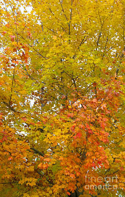 Photograph - Changing Colors 3983 by Charles  Ridgway