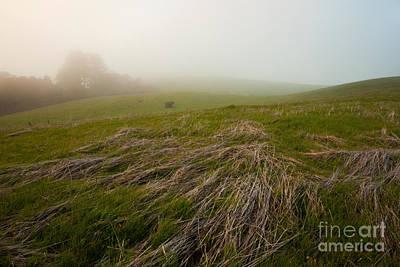 California Photograph - Changing Of The Grass by Matt Tilghman