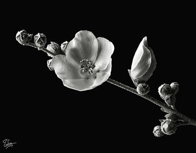 Print featuring the photograph Chaparral Mallow In Black And White by Endre Balogh