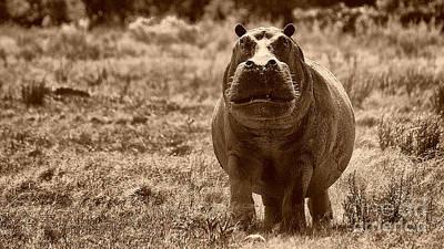 Photograph - Charging Hippo by Mareko Marciniak