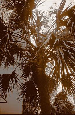 Photograph - Charleston Palm Tree by Emery Graham