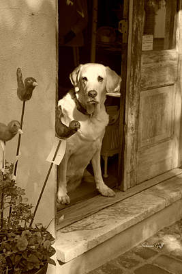 Photograph - Charleston Shop Dog In Sepia by Suzanne Gaff