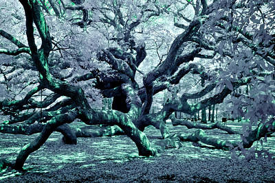 Angel Oak Photograph - Charleston's Angel Oak by Louis Dallara