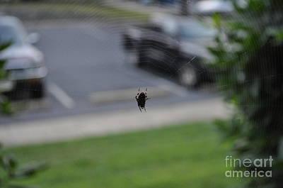 Spider And Her Art Digital Art - Charlotte Web by Lenora Berch