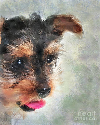 Yorkie Digital Art - Charming by Betty LaRue