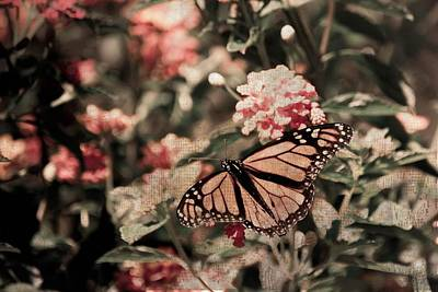 Photograph - Chasing Butterflies by Trish Tritz
