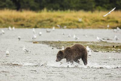 Prints Of Alaska Photograph - Chasing Pinks by Tim Grams