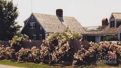 Photograph - Chatham Pink Roses by Barbara Plattenburg