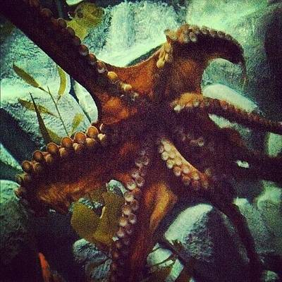 Octopus Wall Art - Photograph - #chattanooga #tennessee #aquarium by S Smithee