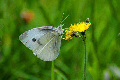 Photograph - Checkered White by Alan Lenk