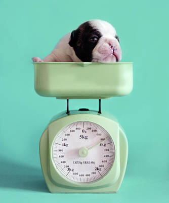 Focus On Foreground Photograph - Checking Puppy Weight by Retales Botijero