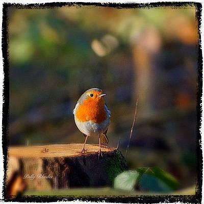 Woodland Wall Art - Photograph - Cheeky Robin Redbreast #robin by Polly Rhodes