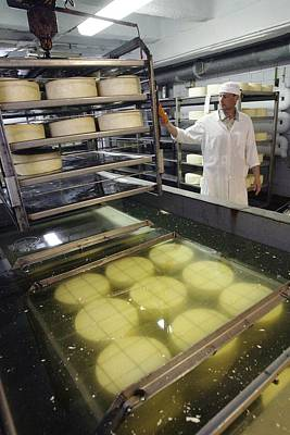 Photograph - Cheese Production, Drying Room by Ria Novosti