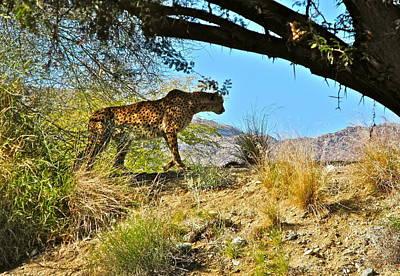 Photograph - Cheetah Exploring  by Kirsten Giving