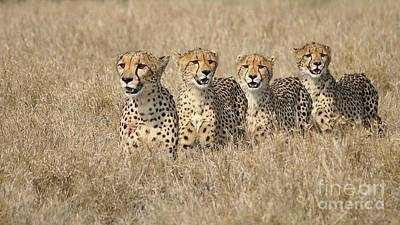 Cheetah Family Art Print by Mareko Marciniak