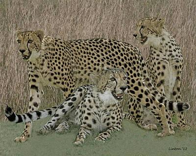 Cheetah Digital Art - Cheetah Montage 2 by Larry Linton