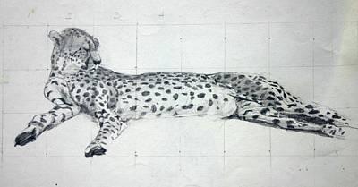 Cheetah Drawing - Cheetah Study by Tom Smith