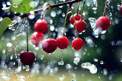 Cherries Art Print by Falko Follert
