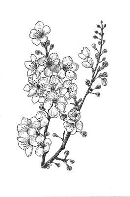 Florals Drawings - Cherry Blossems by Christy Beckwith