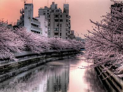 Cherry Blossoms Photograph - Cherry Blossom by Akirat2011, All Right Reserved.