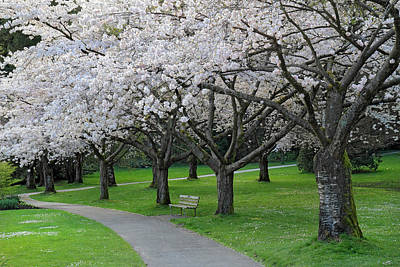 Photograph - Cherry Blossom Park by Pierre Leclerc Photography